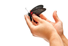 Butterfly in men hands Royalty Free Stock Image