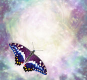 Butterfly messages border. Beautiful multicoloured butterlfy with open wings in bottom left corner of ethereal wispy energy formation background ideal copy space stock photography