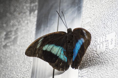 Butterfly on metal Stock Image