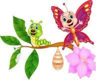 Butterfly metamorphosis Stock Photos