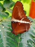 Butterfly. Mindo ecuador south America Stock Photos
