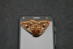 Butterfly on mobile phone screen royalty free stock photo