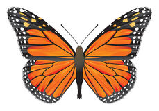 Butterfly monarch Stock Photography