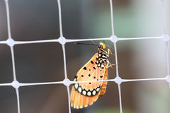 Butterfly. The Monarch Butterfly in Natural stock images