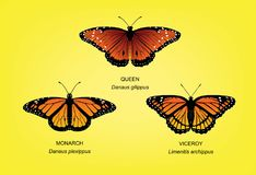 Butterfly Monarch Set Vector Illustration Stock Photos