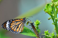 Butterfly mood Royalty Free Stock Images