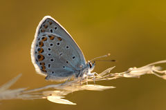 Butterfly in the morning Royalty Free Stock Photos