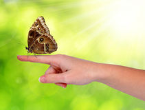 Butterfly Morpho sitting on the hand Royalty Free Stock Photo