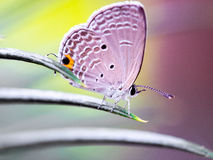 Butterfly. The butterfly is the most beautiful insects, life is always so exciting and fresh Stock Photos
