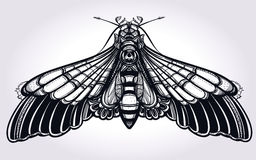 Butterfly moth hand drawn linear style. Royalty Free Stock Image