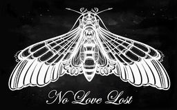Butterfly moth hand drawn linear style. Royalty Free Stock Images