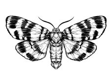 Butterfly / moth sketch. Detailed realistic sketch of a butterfly Stock Photos
