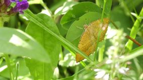 Butterfly - moth on a summer day stock footage