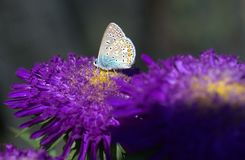 Butterfly, Moths And Butterflies, Brush Footed Butterfly, Flower Stock Photos
