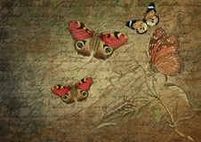 Butterfly, Moths And Butterflies, Fauna, Invertebrate royalty free stock image