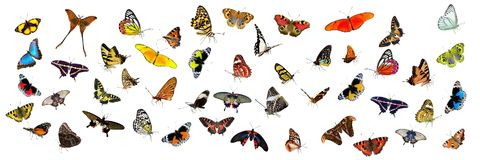 Butterfly, Moths And Butterflies, Insect, Invertebrate