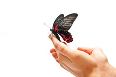 Butterfly in motion Stock Images