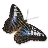 Butterfly. Multi Colored Butterfly on White Background stock photo