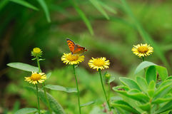 Butterfly and mum stock photography