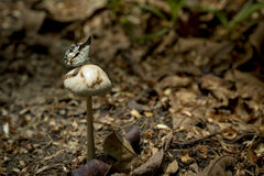 Butterfly on mushroom Royalty Free Stock Photo