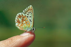 Butterfly on my finger. Close-up shot of a beautiful butterfly on my finger Stock Photos