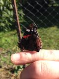 Butterfly on my finger Royalty Free Stock Images