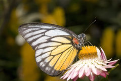 Butterfly with natural background. Photo of butterfly with natural background stock photos
