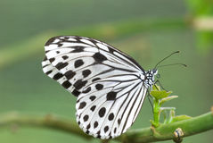 Butterfly with natural background. Photo of butterfly with natural background stock photography
