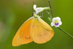 Butterfly with natural background. Photo of butterfly with natural background royalty free stock photo