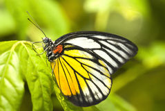 Butterfly with natural background. Photo of butterfly with natural background stock photo