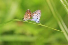 Butterfly in natural habitat Royalty Free Stock Photo