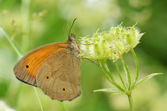 Butterfly in natural habitat Stock Images