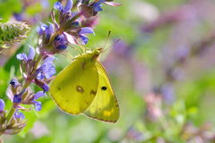 Butterfly in natural habitat Stock Photos