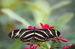 Butterfly in nature background Royalty Free Stock Images