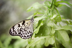 Butterfly in nature background Royalty Free Stock Photos