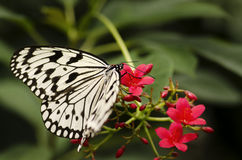 Butterfly in nature background Stock Images