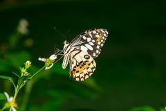 Butterfly nature background park spiny. Butterfly nature background park insect wing animal bright single stock photo