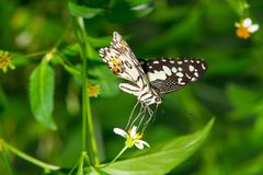Butterfly nature background park spiny stock photography