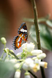 Butterfly in nature Stock Photography