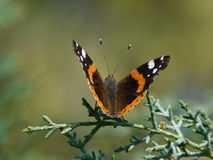 Butterfly in nature Royalty Free Stock Images