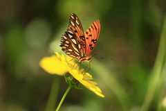 Butterfly in nature Stock Images