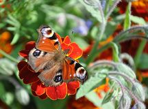 Butterfly and nature Stock Photos