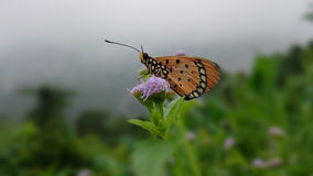 Butterfly. Nature flowers animal colors Royalty Free Stock Photo