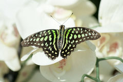 Butterfly in the nature green forest habitat Royalty Free Stock Images