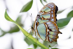 Butterfly in nature habitat. Butterfly macro view. Butterfly closeup royalty free stock photography