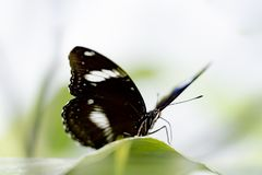 Butterfly in nature habitat. Butterfly macro view. Butterfly closeup stock images