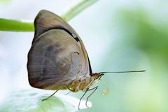 Butterfly in nature habitat. Butterfly macro view. Butterfly closeup royalty free stock photo