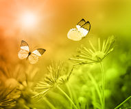 Butterfly on the nature. Stock Photo