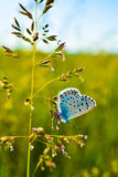 Butterfly. Nature insect landscape grass summer Stock Photo