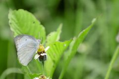 Butterfly. Nature leaves green wildlife birdphotography royalty free stock photo